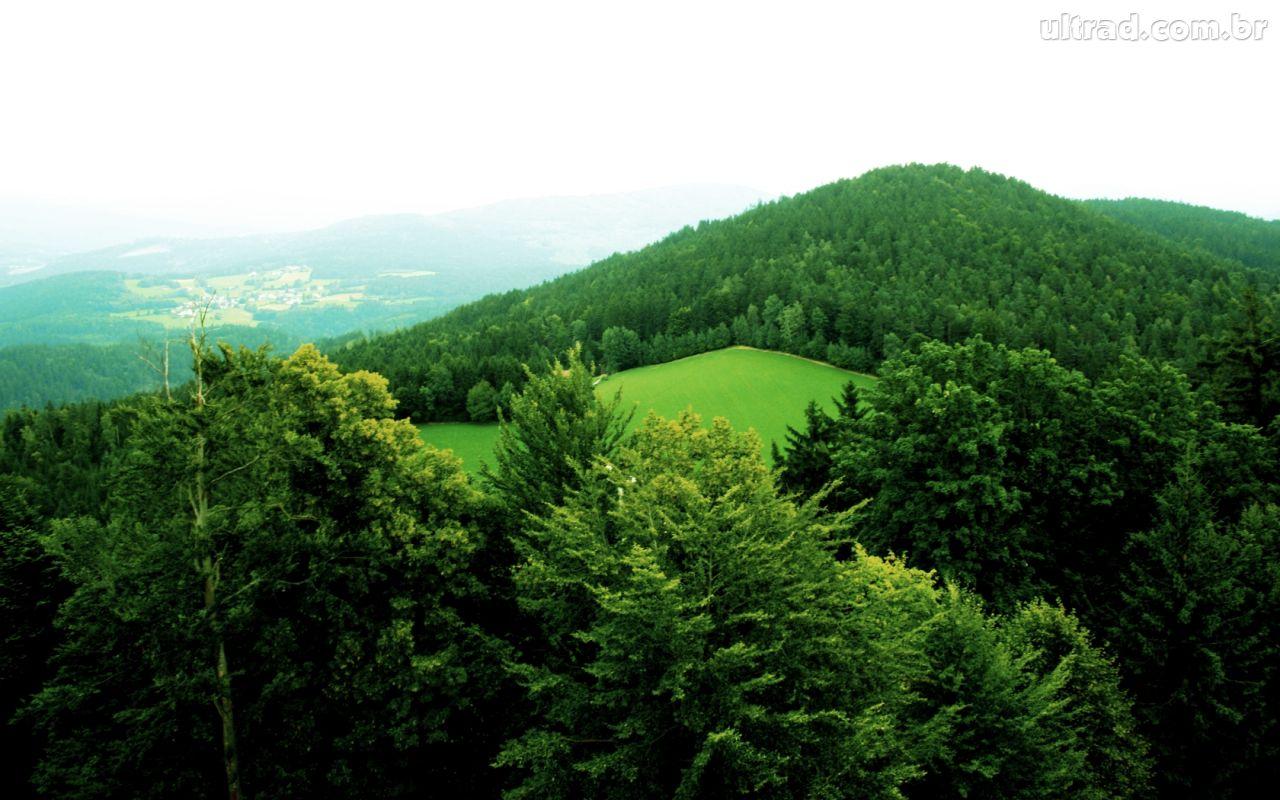 http://1.bp.blogspot.com/-pQePHmvSrnc/TcK1SpTM-CI/AAAAAAAAAB0/70s9oA1HWWY/s1600/129233_Papel-de-Parede-Floresta-de-Baviera-Alemanha_1280x800.jpg