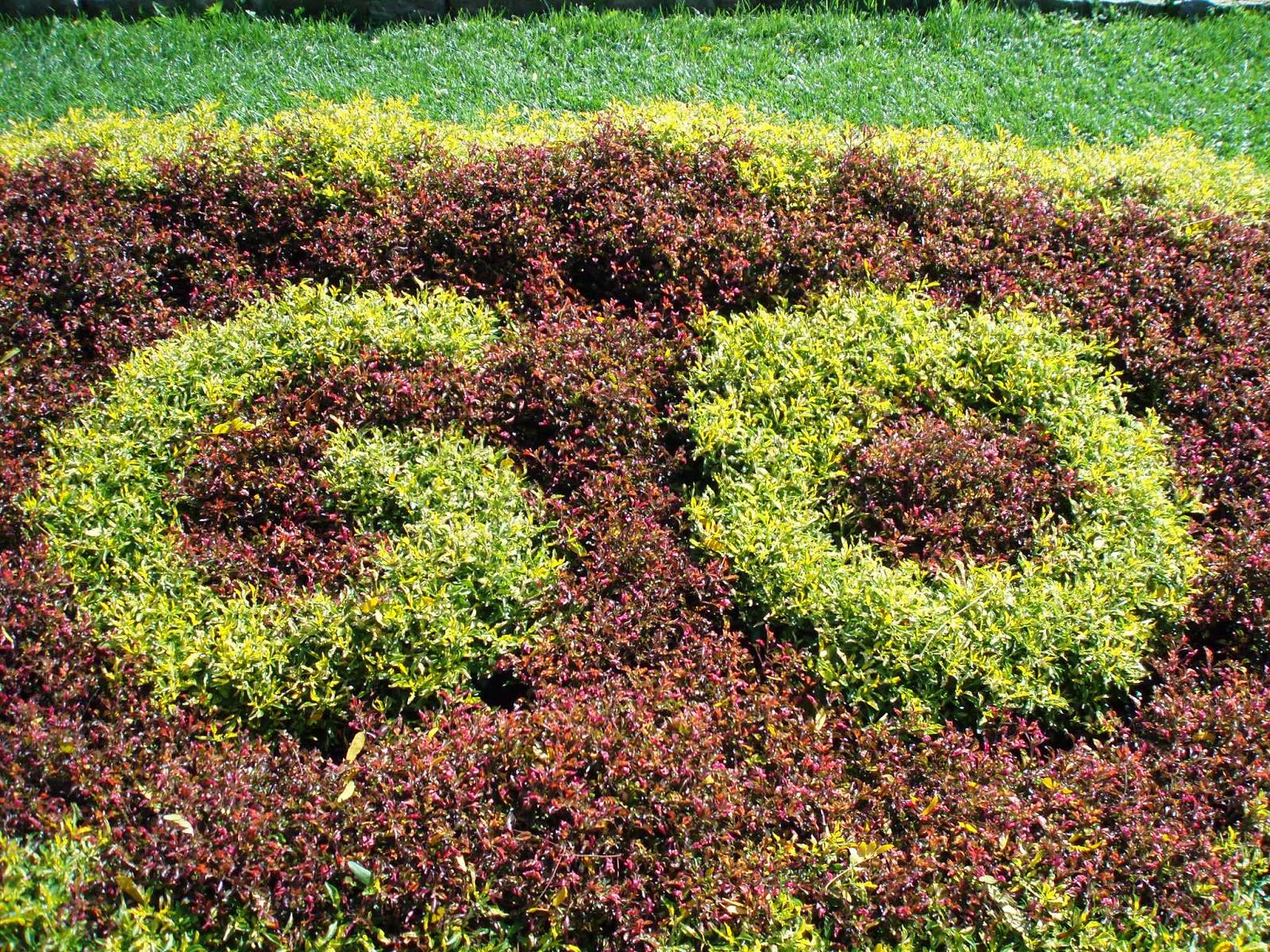 Awesome Alternantheras - Rotary Botanical Gardens