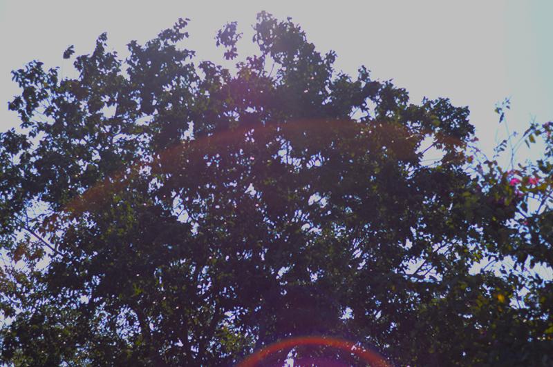 sun flared trees