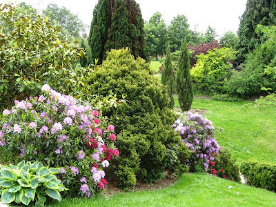 Colourful rhododendrons