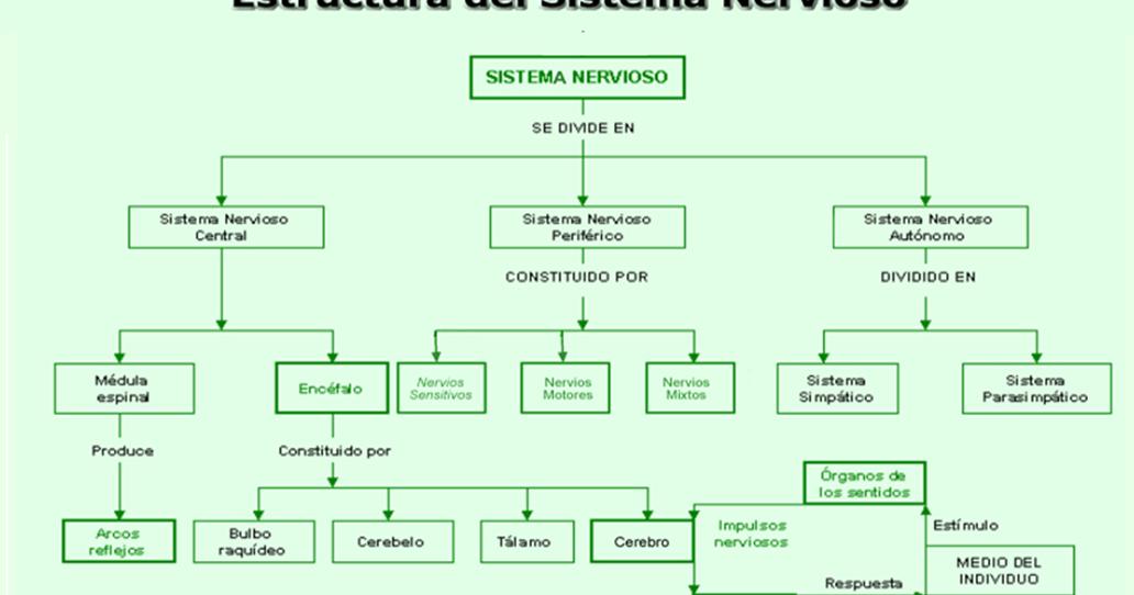 Mapa Mental Sistema Nervioso | Psicología USPG