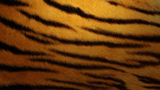 Art background for photoshop tiger skin