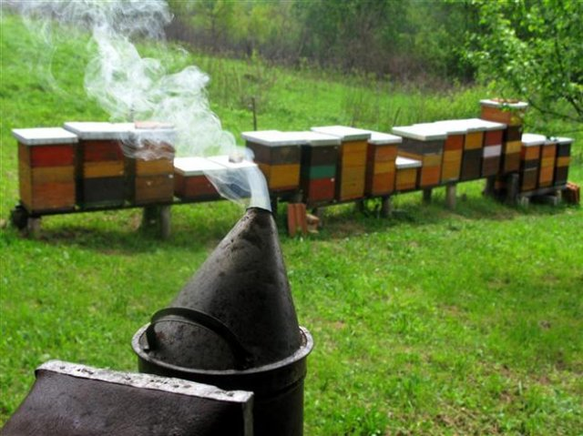 smoke torch for pacifying bees in hive