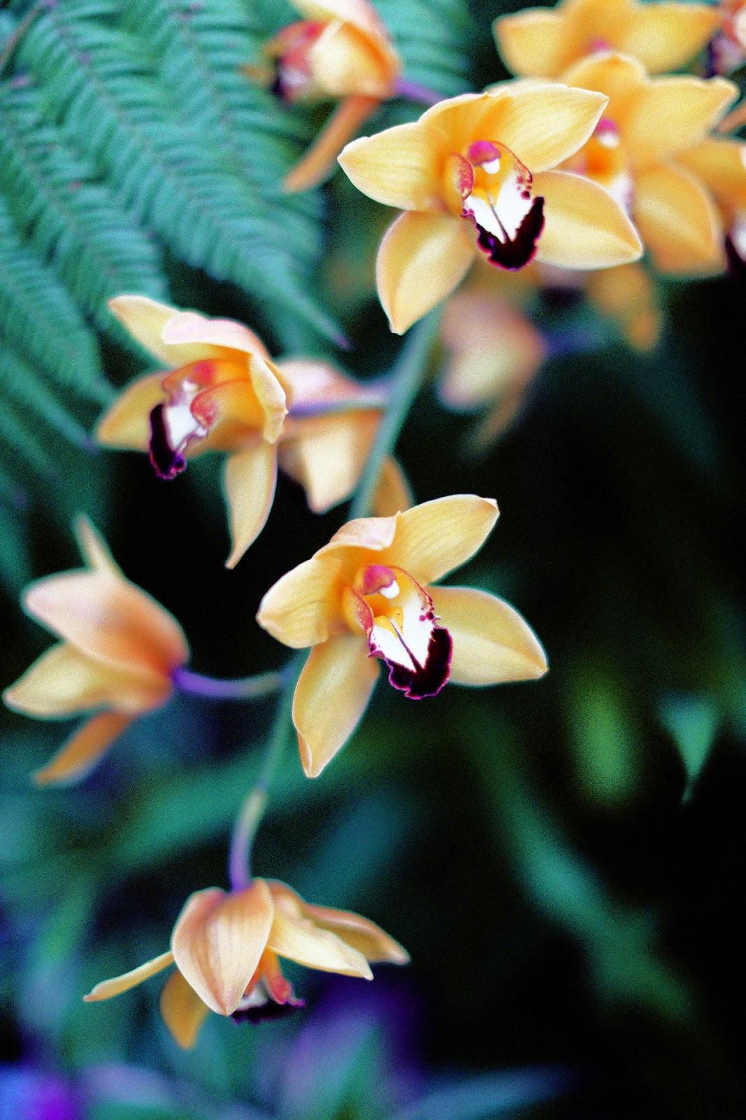 sunday,a beach life, tumblr,orchidées,fleurs