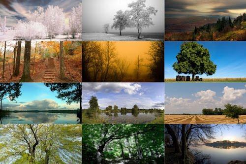 Fotografías de árboles en  todas las estaciones del año II