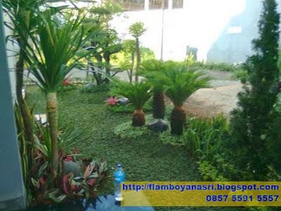Tukang Taman Surabaya Taman Minimalis Kombonasi pandan