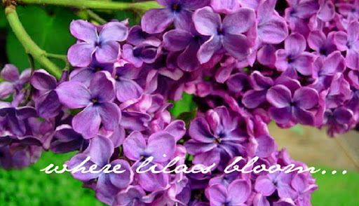 Where Lilacs Bloom