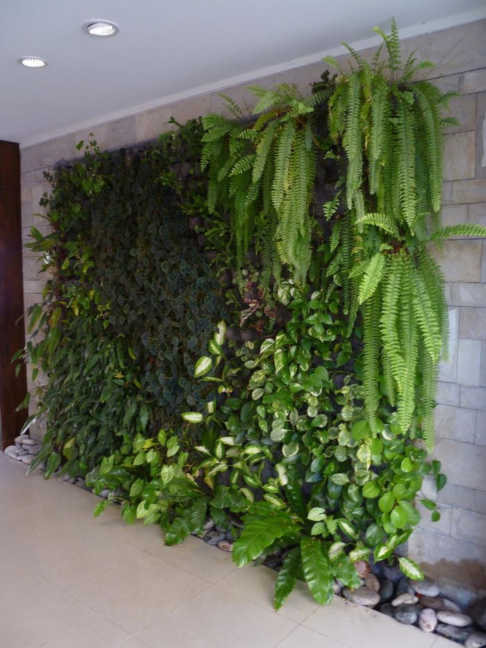 Fitorremediaci n del aire interior jardines verticales for Jardin vertical exterior