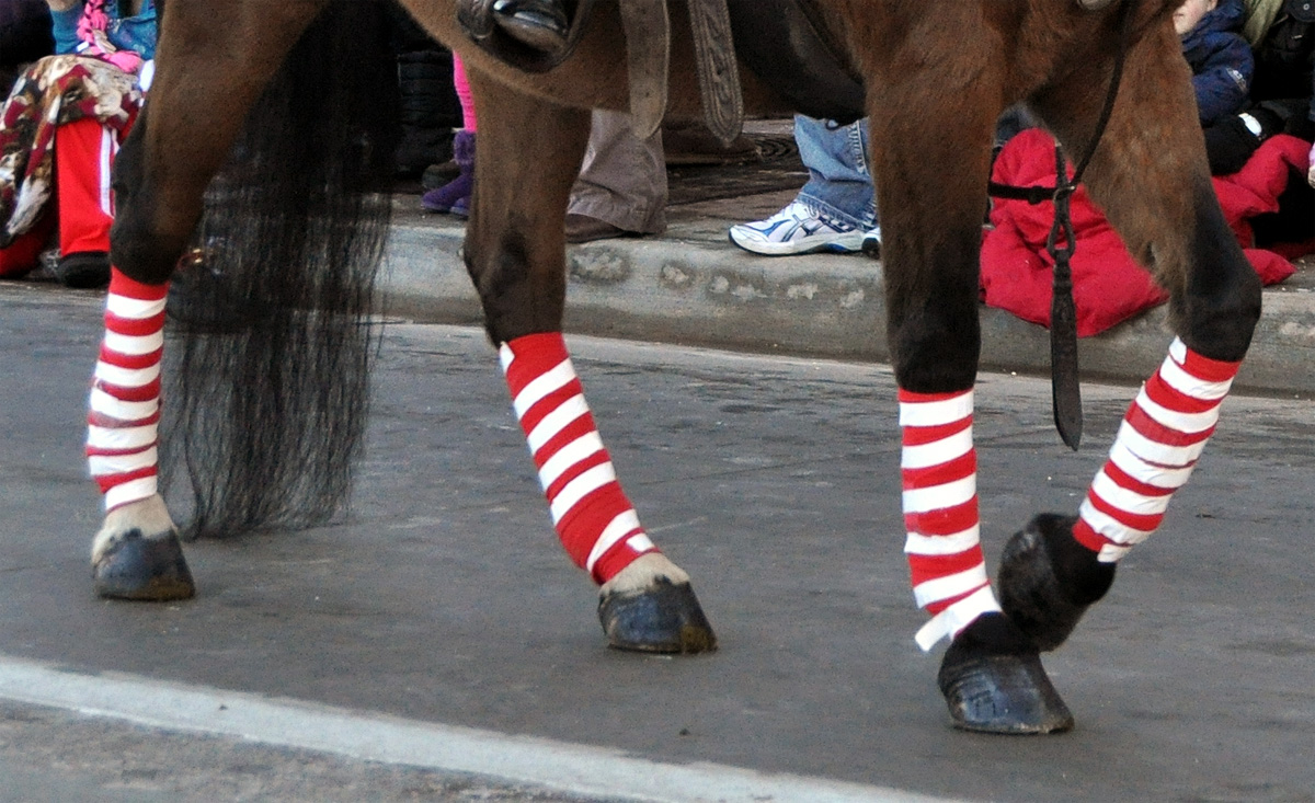 these pictures were taken during the parker christmas carriage parade and they highlight some of the many ways a horse can be made to look christmas y