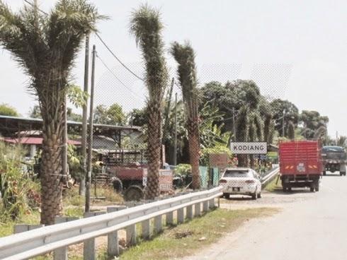 Pokok Kurma Di Sekitar Pekan Kodiang