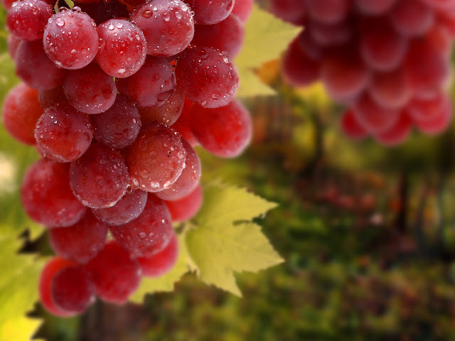 Wet Grapes Close Up Photo HD Wallpaper