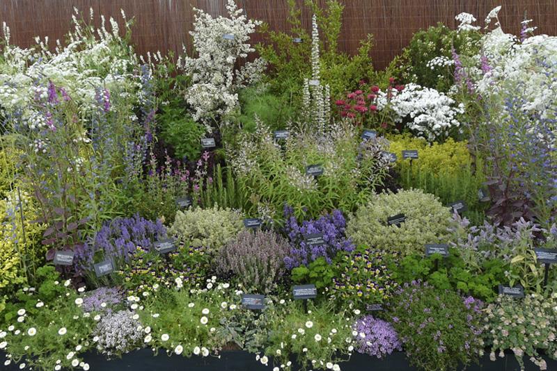 Herbs For Every Size Garden Edible Garden Inspiration