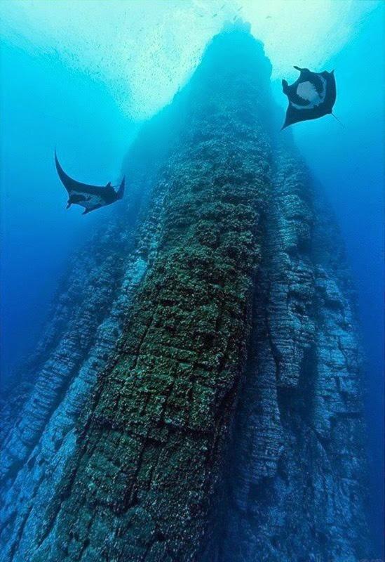 Isla Socorro buceo divind socorro island
