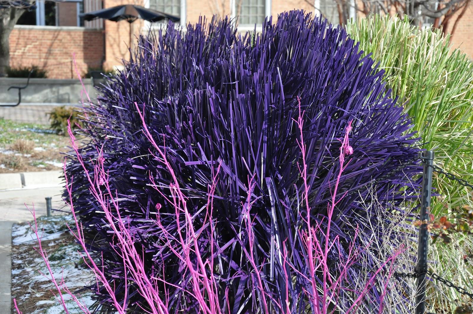 Umd arboretum and botanical garden february 2012 for Purple grass