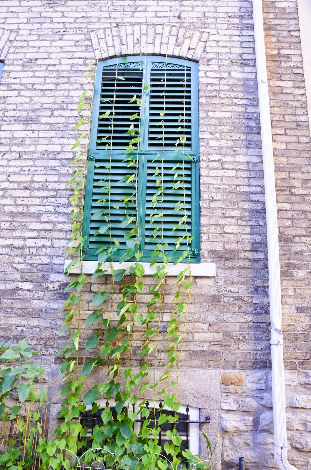 beautiful windows with green shutters and brickwork in Quebec City