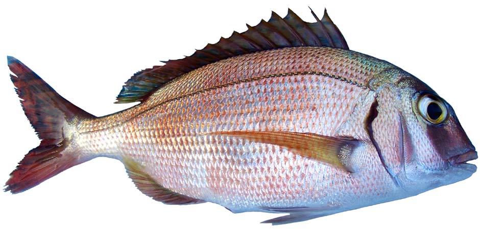 pestii-sunt-afectati-de-micro-rezidurile-de-plastic