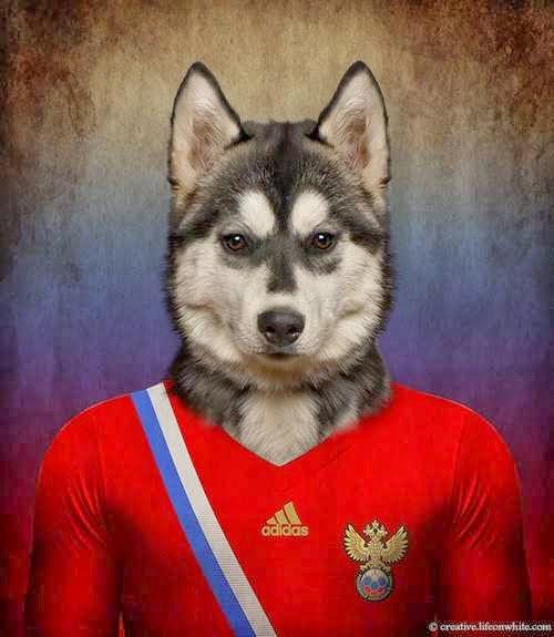 Perros de selección de cara al mundial de Fútbol Brasil 2014