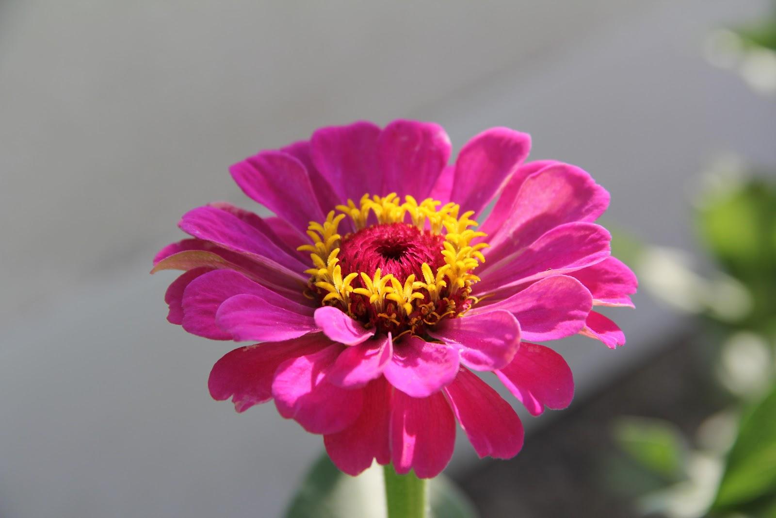 Fotos jm g flor de verano - Flores de verano ...
