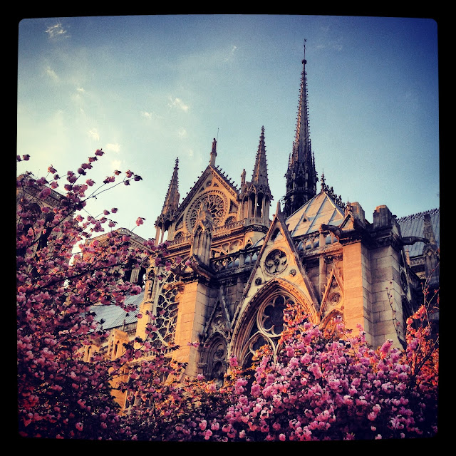 Paris church cathedral Notre Dame pink spring flowers blossoms trees