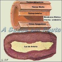 A esclerose das artérias, quando se dá devido à deposição de placas de ateromas (gorduras) em suas paredes internas, recebe o nome de aterosclerose