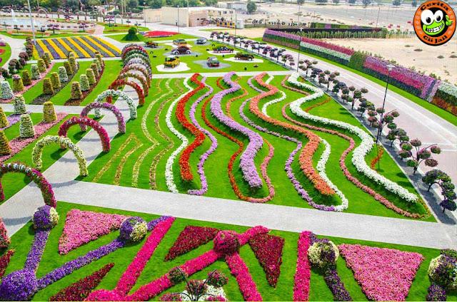 Dubai Miracle Garden, Taman, Bunga, Terbesar, Di Dunia