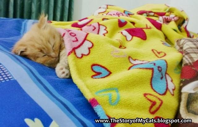 kucing tidur di kasur lucu
