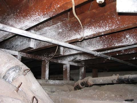 Mold under house in crawl space