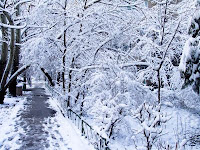 Ultima ninsoare