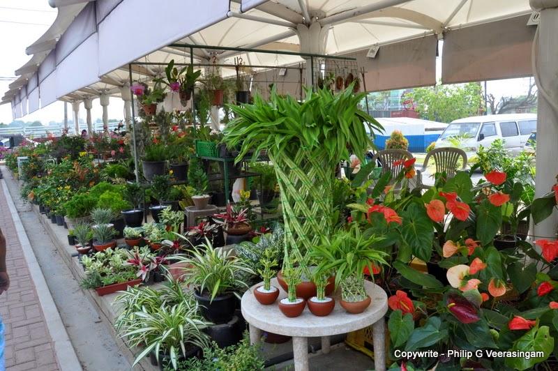 Images of sri lanka on spot plants for sale