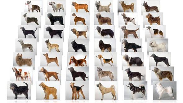following is the list of dog breeds