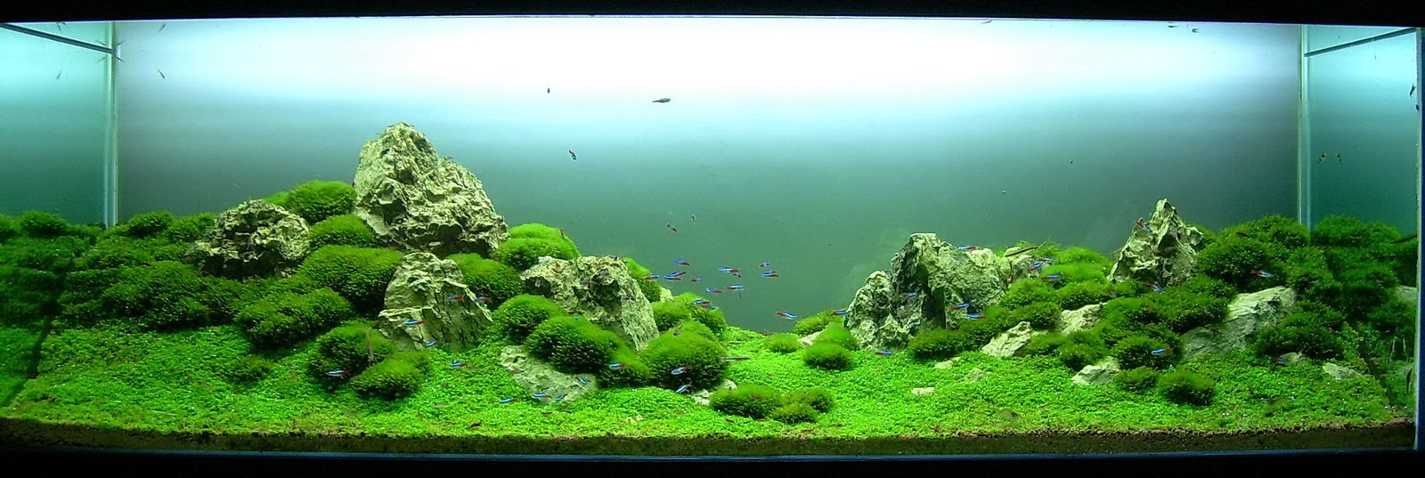 Dunia Aquascape R E N Shop And Gallery
