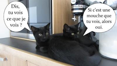 Deux chatons noirs totalement identiques !