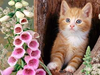 Cute HD Cats Wallpaper