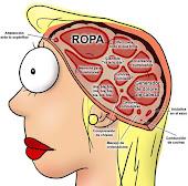 El cerebro de una mujer....