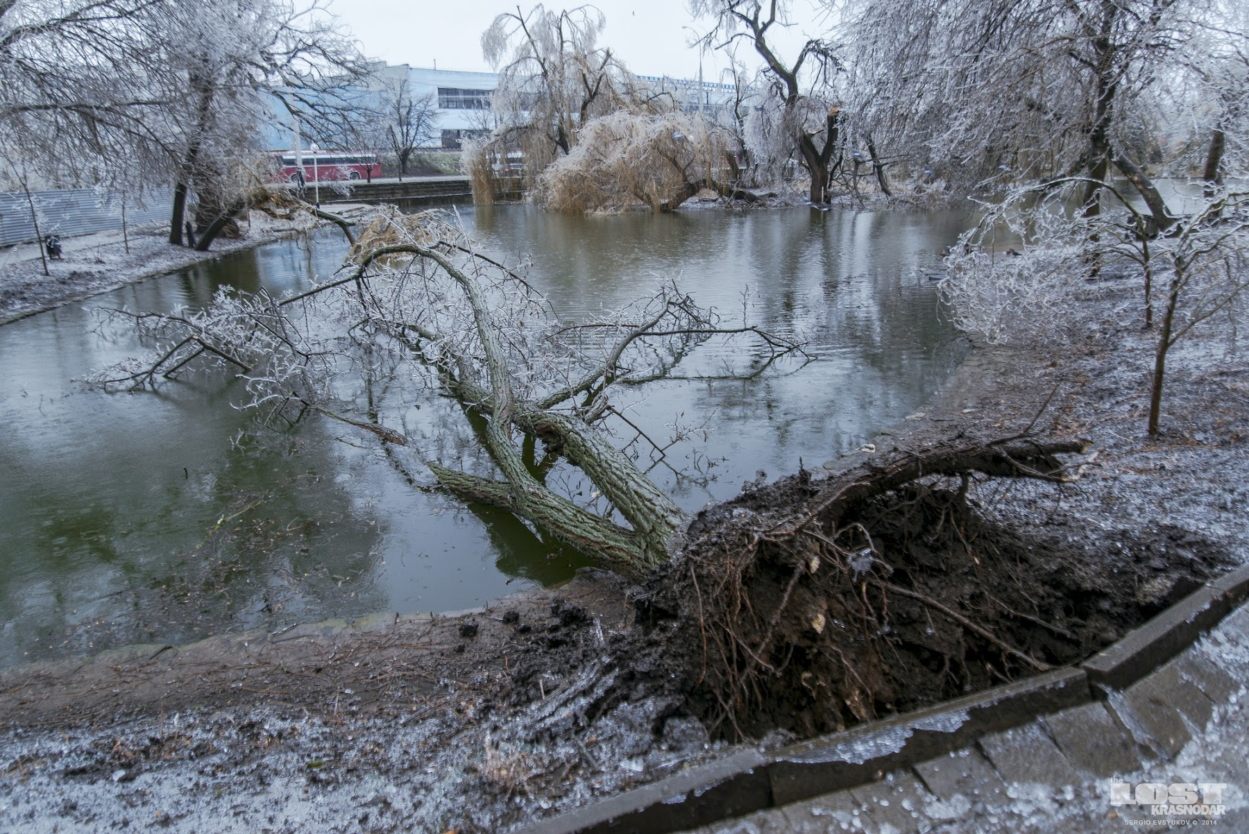Поваленные деревья в Краснодаре