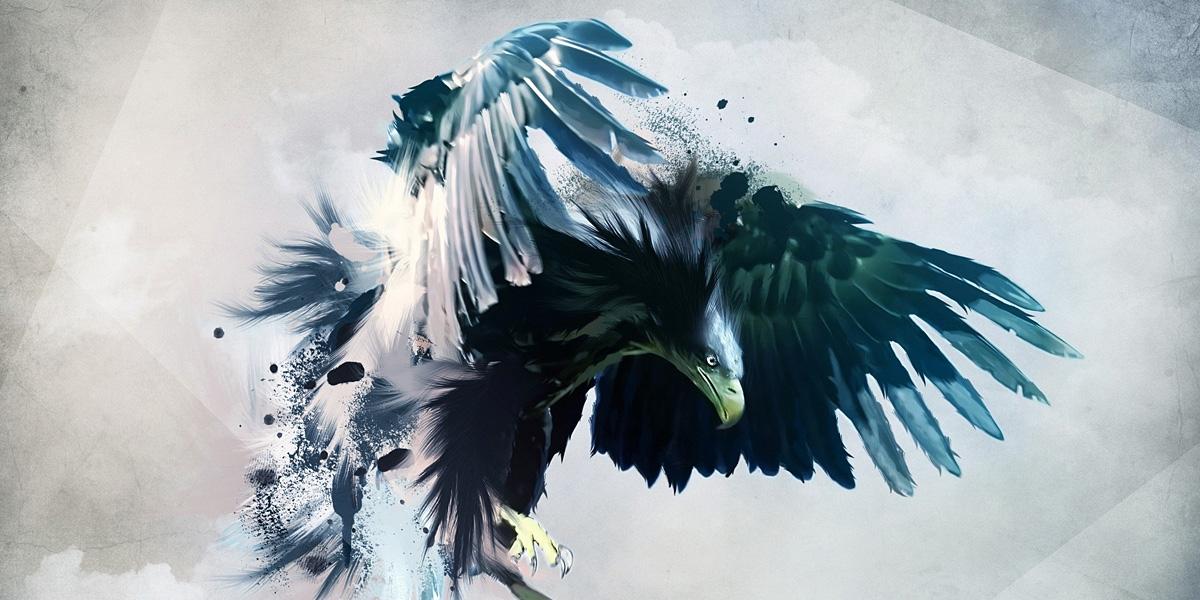 Bird 300+ Muhteşem HD Twitter Kapak Fotoğrafları