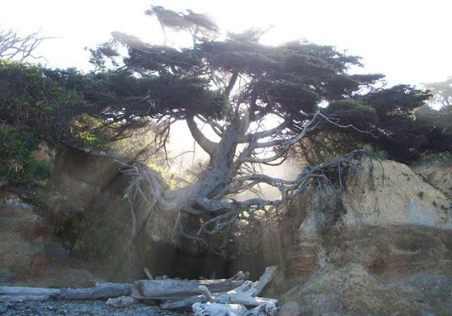 عجائب الدنيا وهل تعلم - شجرة تتعلق في الهواء