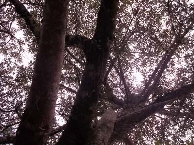 Árvores, folhas, troncos