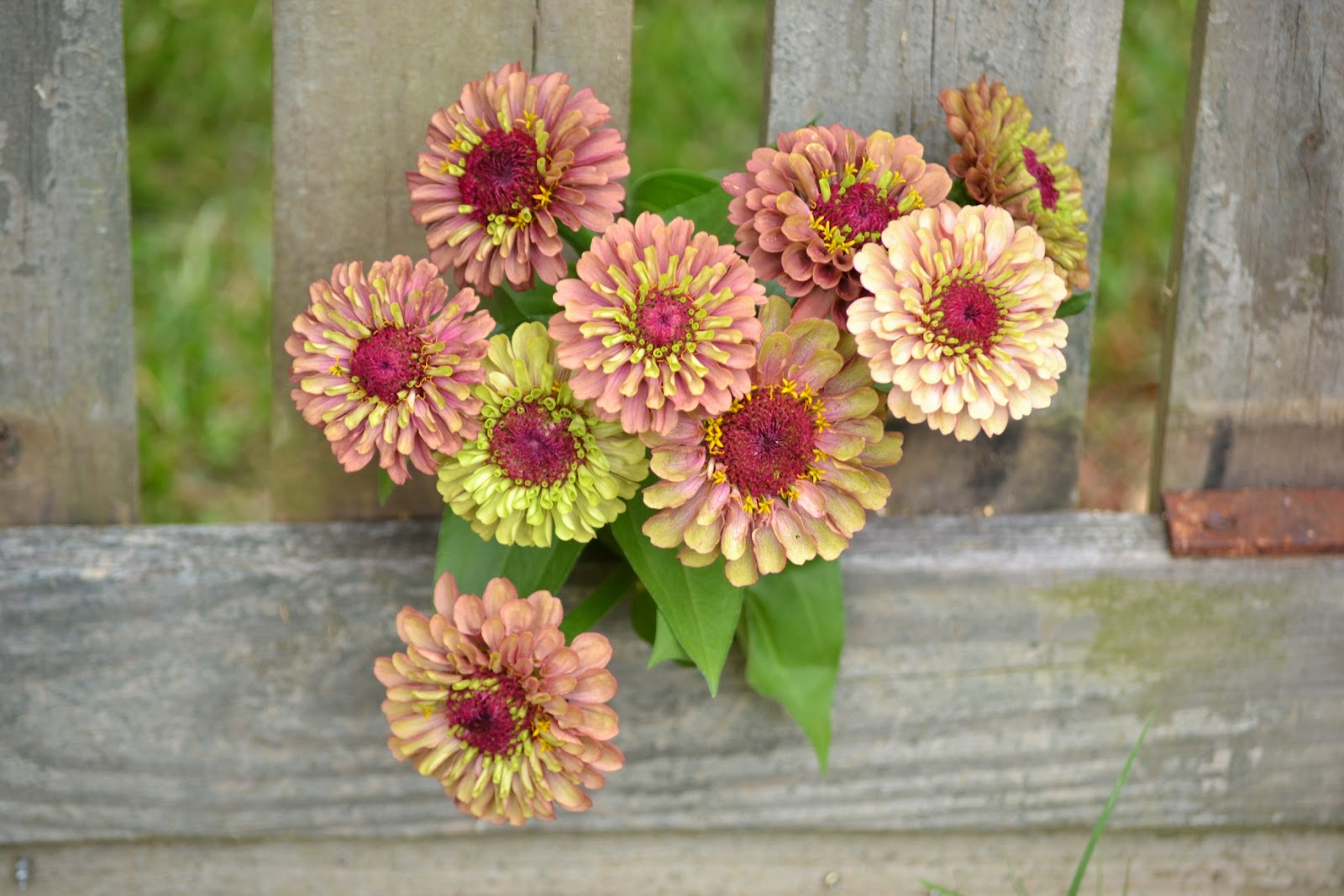 Wedding Flowers from Springwell: Summertime is Zinnia Time!