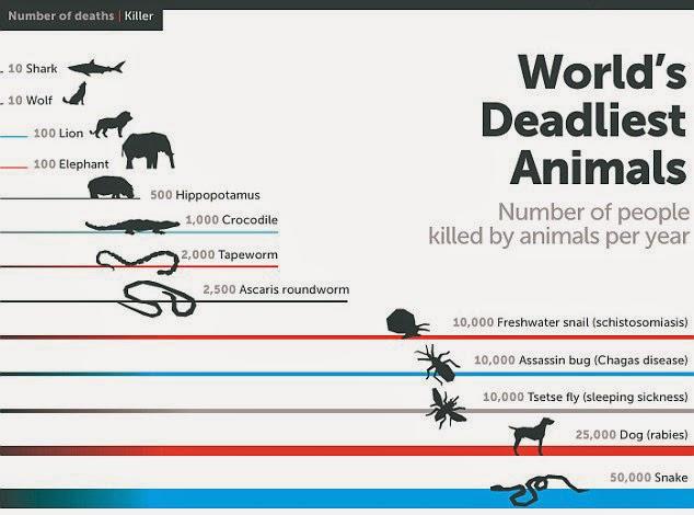 Ternyata Nyamuk adalah Hewan yang Paling Banyak Membunuh Manusia