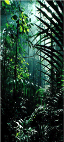 Rainforest Herbs professional herbal products