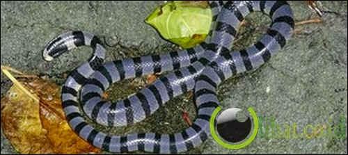 Pulau tak bernama yang dihuni ular-ular berbisa