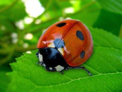 Snooping Around Good Luck Files Ladybugs