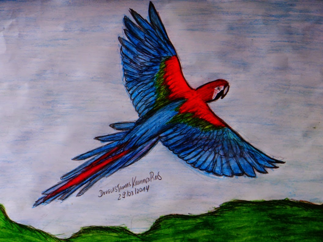 Super DTKP ARTES: Desenho Arara Vermelha QG99
