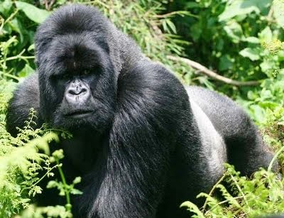 WAHANA: 7 Gambar Hewan Herbivora Paling Berbahaya !!
