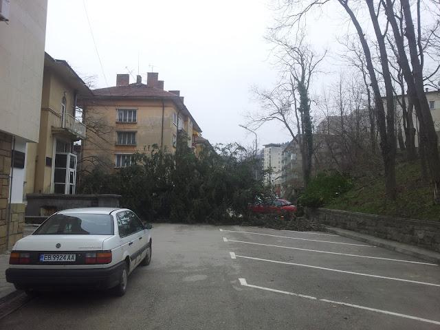 Дърво прерперечи пътя в Габрово