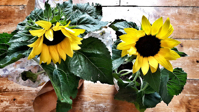 Project 365 day 197 - Sunflowers // 76sunflowers