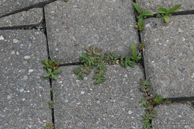 Cómo usar vinagre para matar las malas hierbas