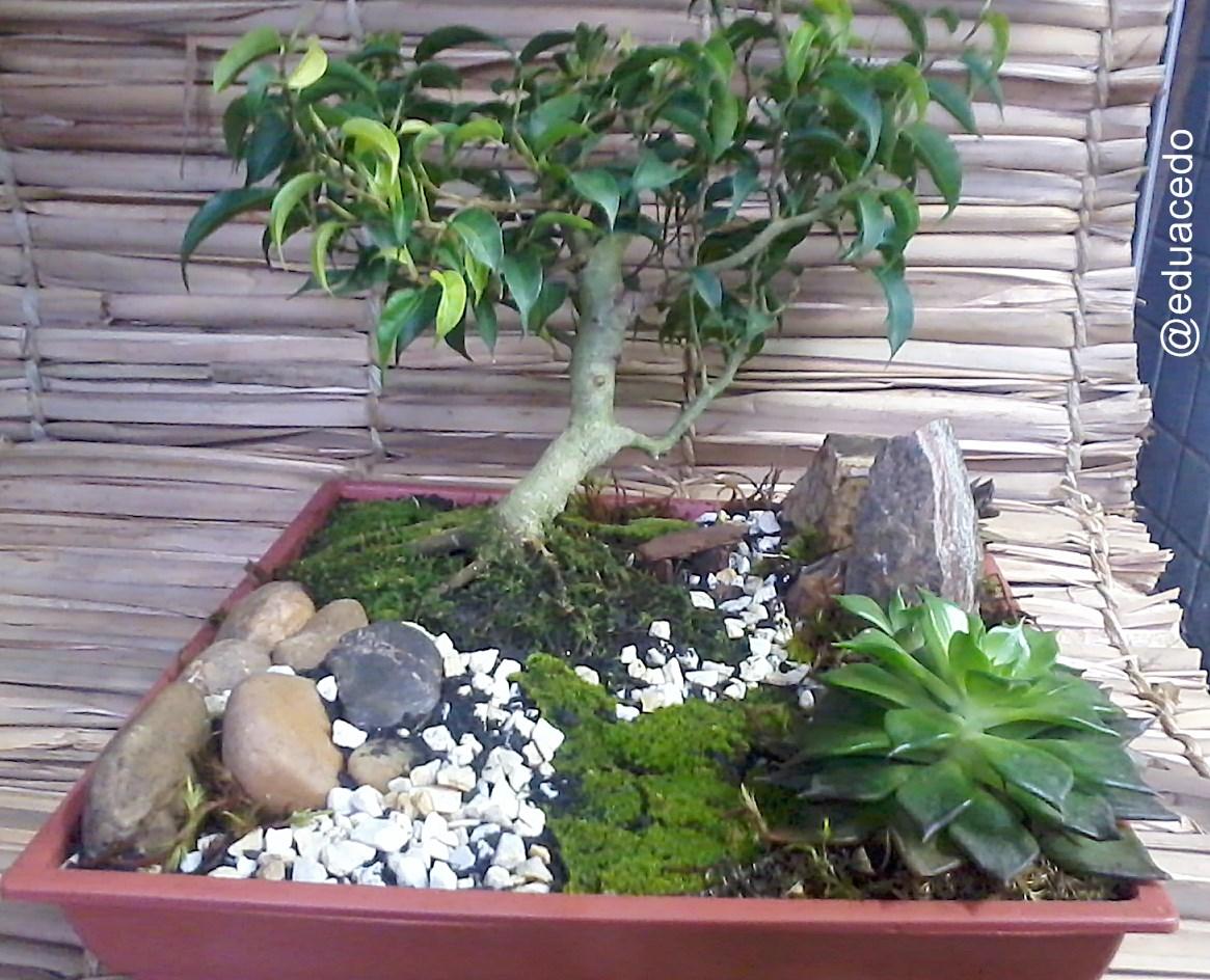 Fnix Plantas E Jardins BONSAI Estilos Bsicos ERETO Informal