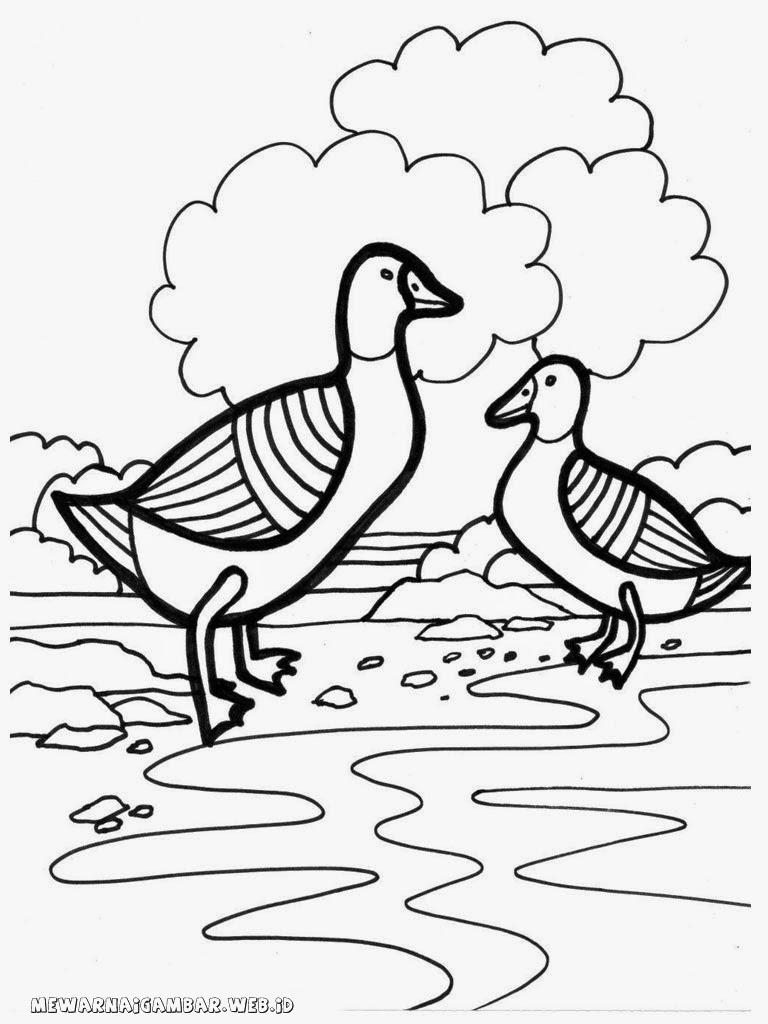 gambar mewarnai peternakan bebek